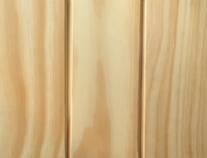 Сосна бессучковая (Чили)